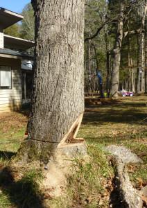 woodscapers-felling1
