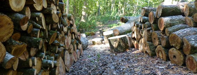 woodscapers-firewood2